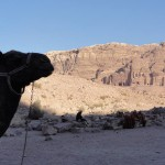 Travelling for Fun, Petra, visit Jordan: A camel looks on at the wonder of Petra