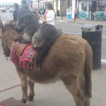 Travel for fun, visit Ireland, Killarney, Kerry: One of the many tricks of dogs and donkeys in Killarney