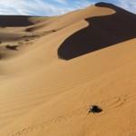 Visit Morocco, Merazouga, Sahara Desert, Travelling for Fun: A scarab beetle climbs a huge sand dune near Merzouga
