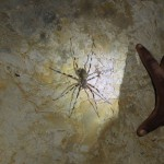 Things to do in Madagascar, Travelling for Fun,  A tiger spider in the bat cave